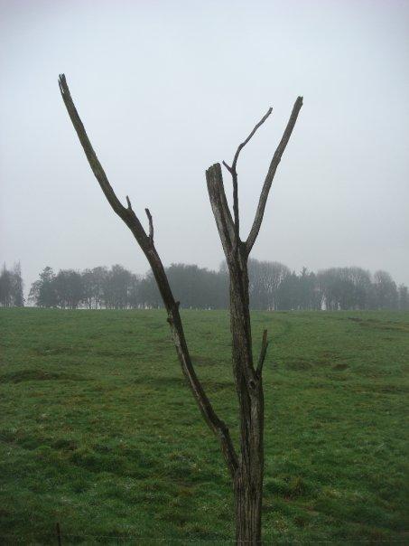 danger-tree