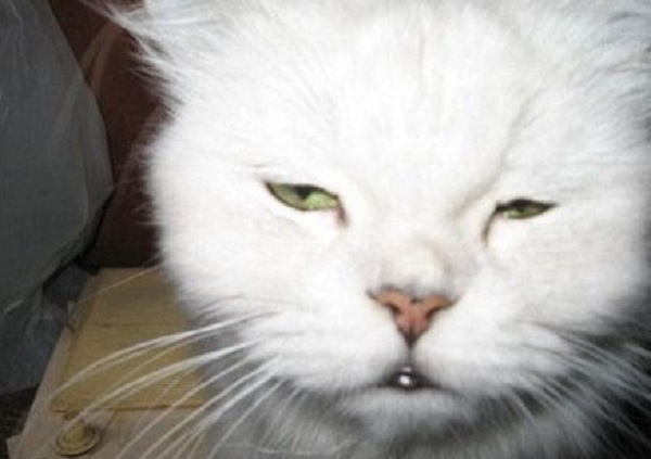 Ten Cats With Hangovers Who Need the Hair of the Dog