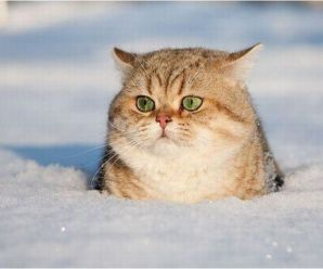 Top 10 Amazing Images of Cats in The Snow