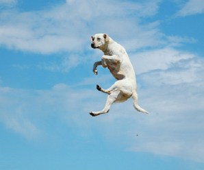 Ten Amazing Dogs Who Can Jump Higher Than Me!