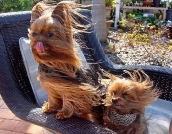 Small dog in Very Strong Wind
