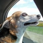 Top 10 Images of Dogs in The Wind