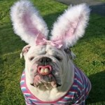 Ten Fake Easter Bunnies Who Are Sure to Make You Smile