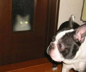 Ten Laser Eyed Cats Who Zap the Smiles Onto Your Face