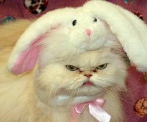 Ten Scary Easter Cats You Won't Want a Chocolate Egg From