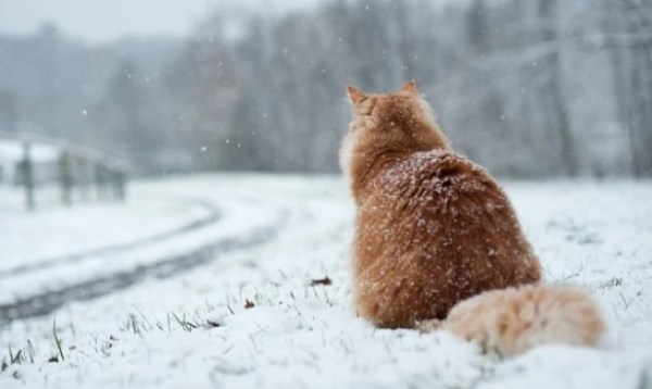 Cat waiting in the snow