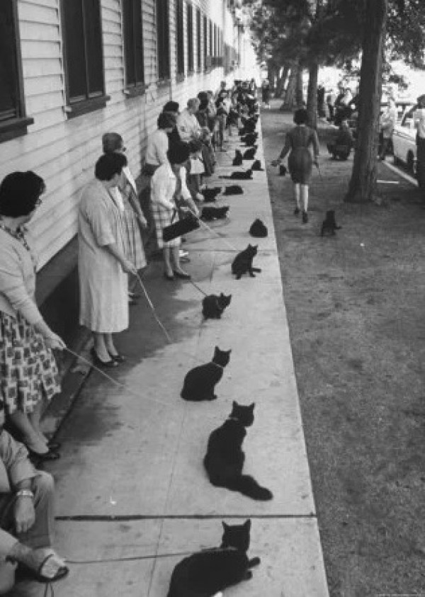 Black cats waiting in a line for a tv show audition