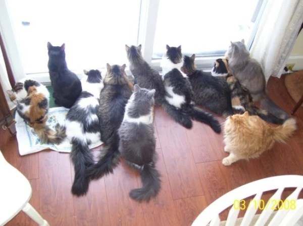 Lots of cats waiting to go outside