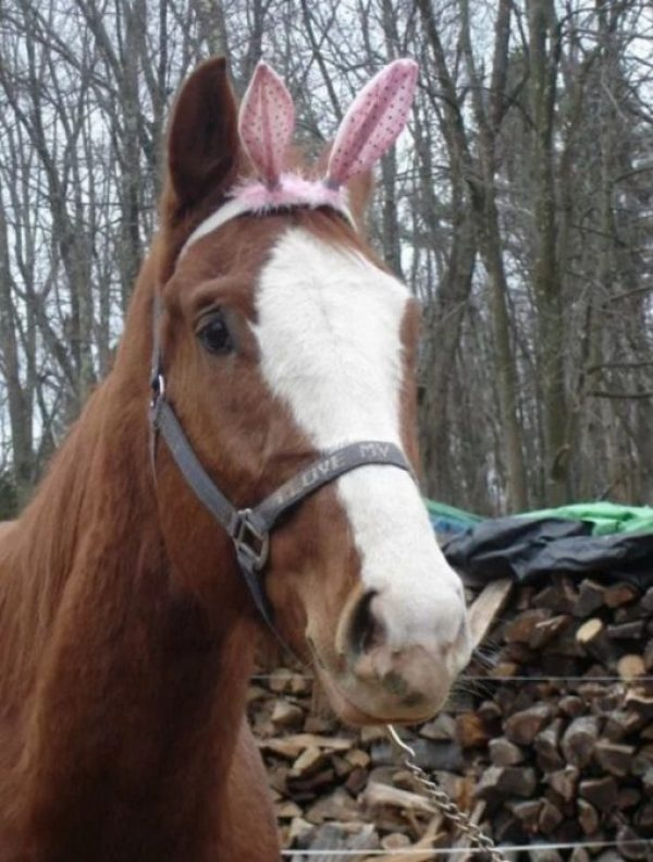 Horse Dressed as the Easter Bunny