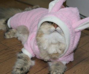 Top 10 Obviously Fake Easter Bunnies