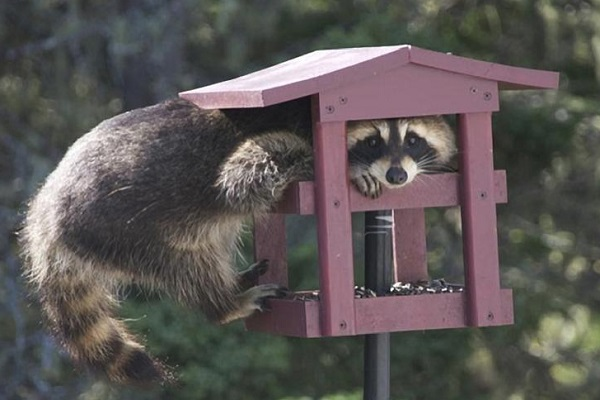 Ten Amazing, Crazy and Unusual Bird Feeders From Around the World