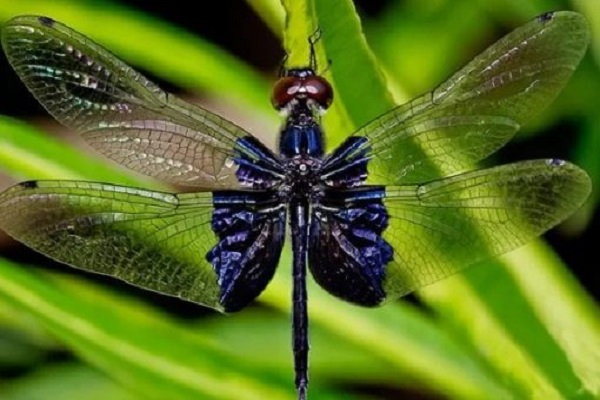 Ten of the Most Amazing Dragonflies You Will Ever See