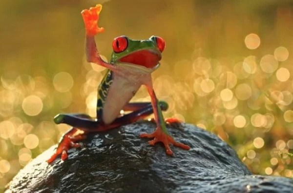 Frog Waving Hello