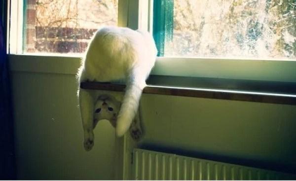 Upside Down Cat