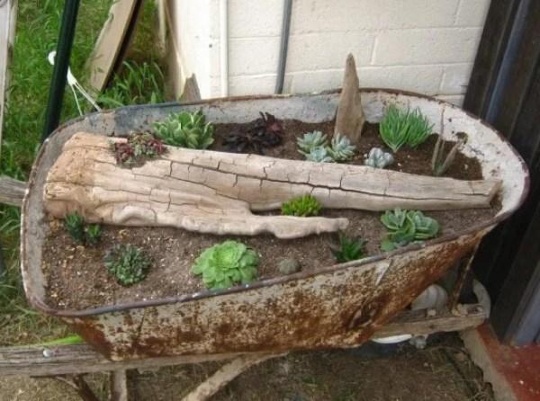 Wheelbarrow turned into a succulents garden