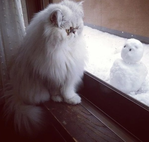 Cat looking out of a window at the snowman