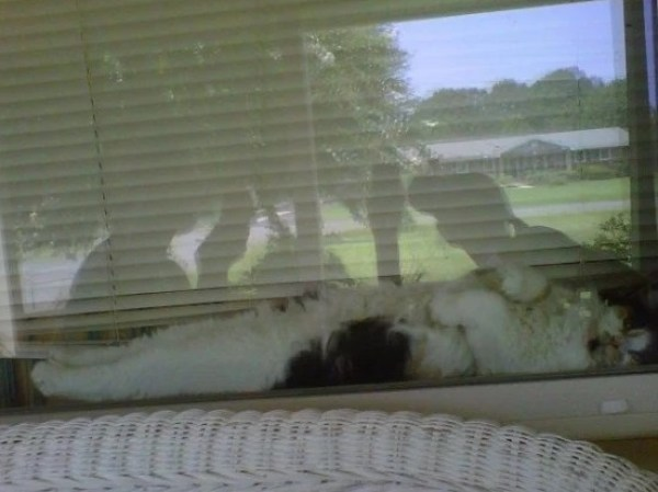 Cat laid down looking out of a window