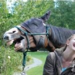Ten Horses Laughing That Is Almost Impossible Not to Laugh at