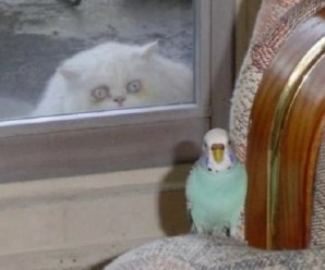 Ten Very Creepiest Cats You Will Not Want to Smooth