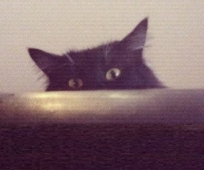Top 10 Best Images of Creepy Cats