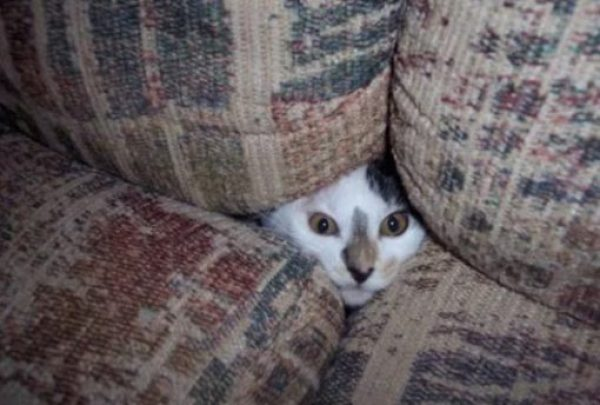 Creepy Cat Poking Head Through Sofa