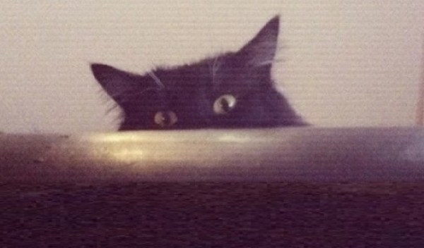 Scary cat looking over the sofa