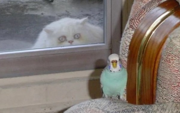 Creepy Cat Looking Through Window at a Bird