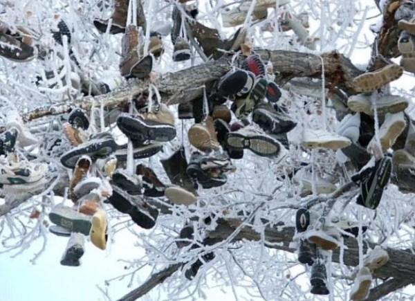 Shoe Tossing: Shoes in a Frozen Tree