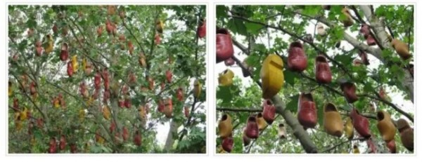Shoe Tossing: Hundreds of Clogs in a Tree