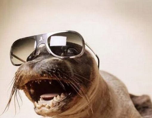 Seal Wearing Glasses