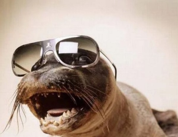 Seal Wearing Glasses