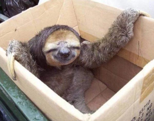 Sloth in Box