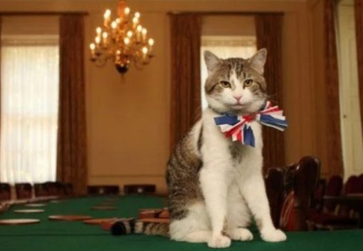 Cat Wearing a Union Jack Bow Tie