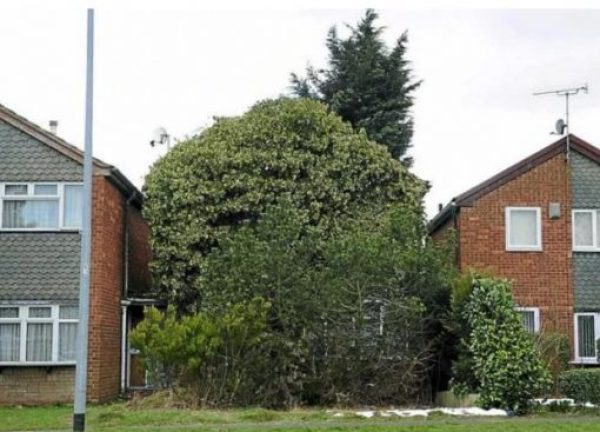 House overgrown by plants