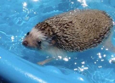 Ten Animals in Paddling Pools Having a Slashing-Good Time