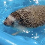 Ten Animals in Paddling Pools Having a Slashing-Good Time