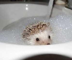 Ten Animals in Sinks Who Prove It's Not Just Cats Who Love Them
