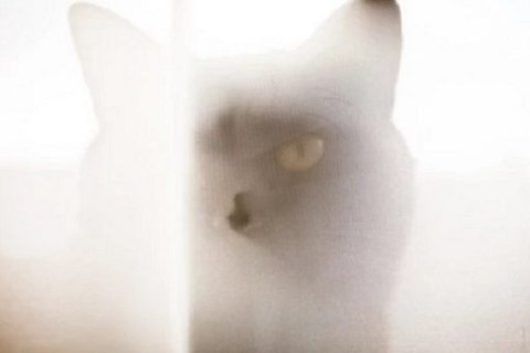 Ten Cats Hiding Behind Curtains Who Will Creep You Right Out