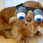 Ten Dogs Wearing Silly Glasses Who Are Sure to Make You Smile