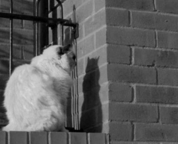 Strange Cat Staring at a Brick Wall