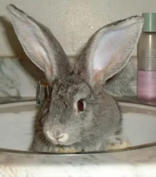 Rabbit in a Sink