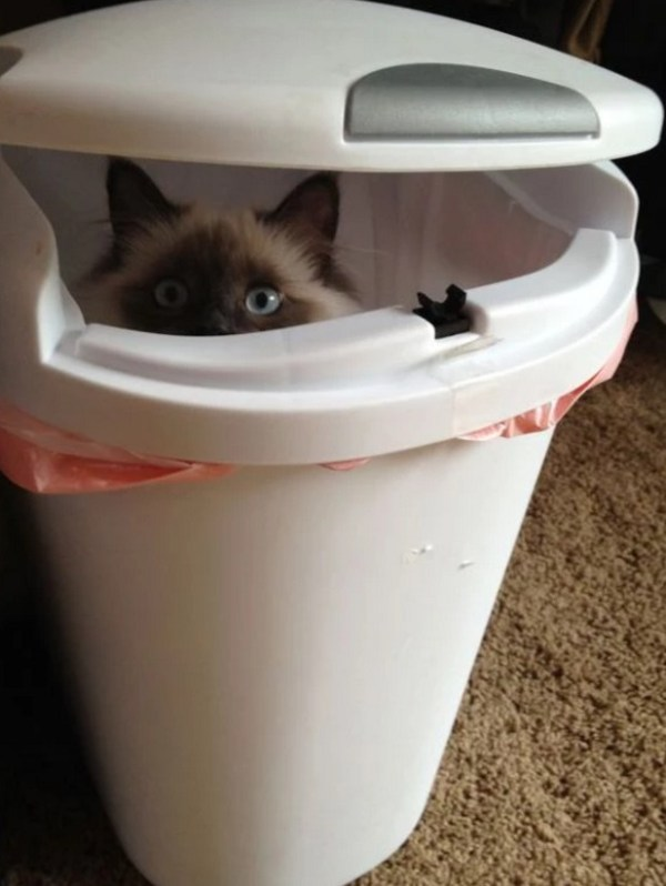 Cat Disguised as a bin