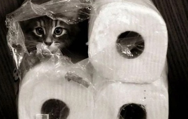 Cat Disguised as a kitchen roll