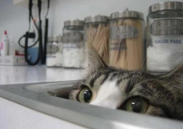 Cat Hiding in a Sink
