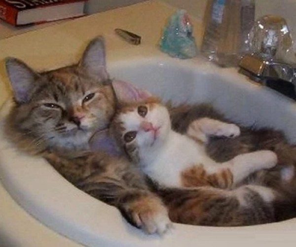 2 Cats Resting in a Sink