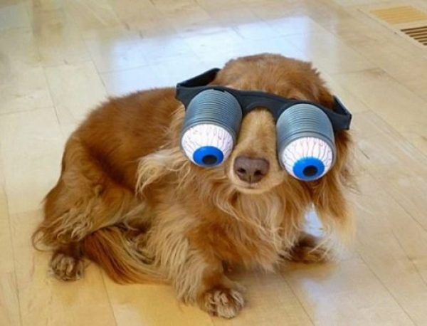 Dogs Wearing Googly Eyes