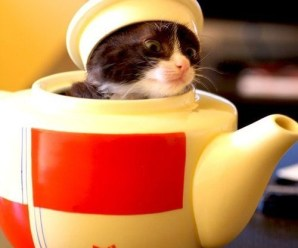 Top 10 Funny Images of Cats In Disguise