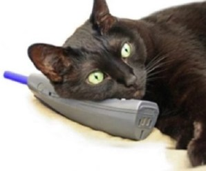 Ten Animals on the Phone Running Up Your Phone Bill