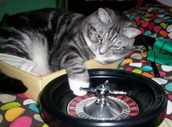 Cat Playing Roulette
