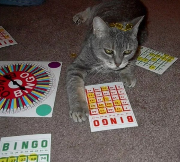Cat Playing Bingo